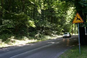 Kto odpowiada za szkody kolizji pojazdów z dzikimi zwierzętami?