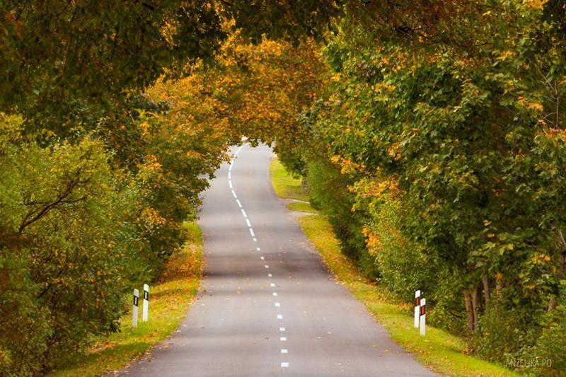 Droga przez Park Narodowy na Litwie